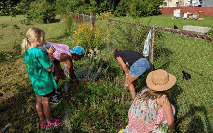 Foragers Weeding the Pollinator Garden