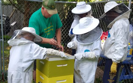 Foragers Hive Inspection